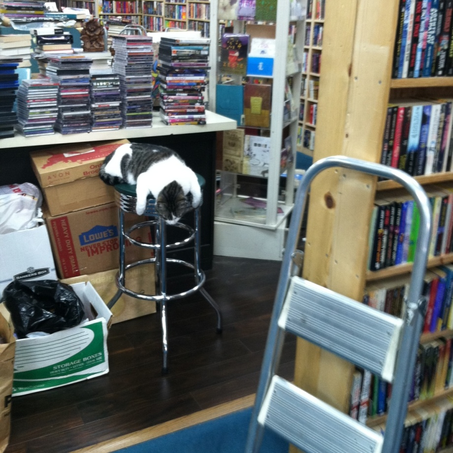 cat on stool at the bookstore