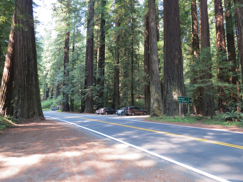 Redwood trees next to cars at Avenue of Giants