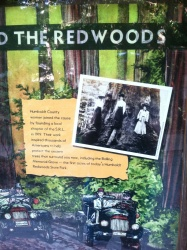Museum piece - Humboldt County women helped proted the redwoods