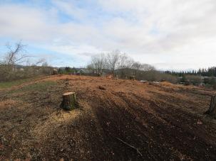 Sawdust covered earth