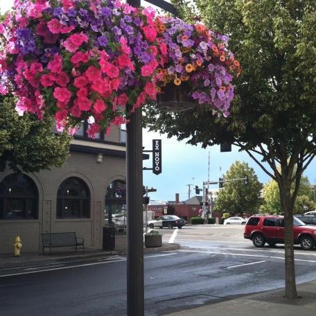 Hanging flowers downtown Beaverton.