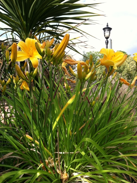 Yellow flowers and a street light