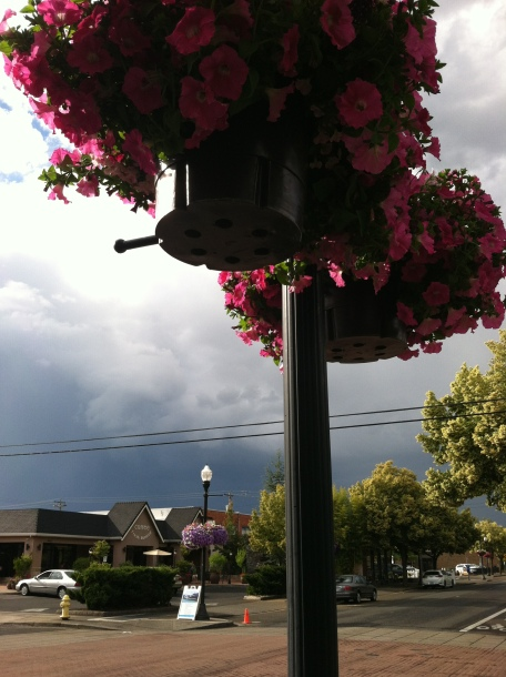 Stormy sky and hanging flowers