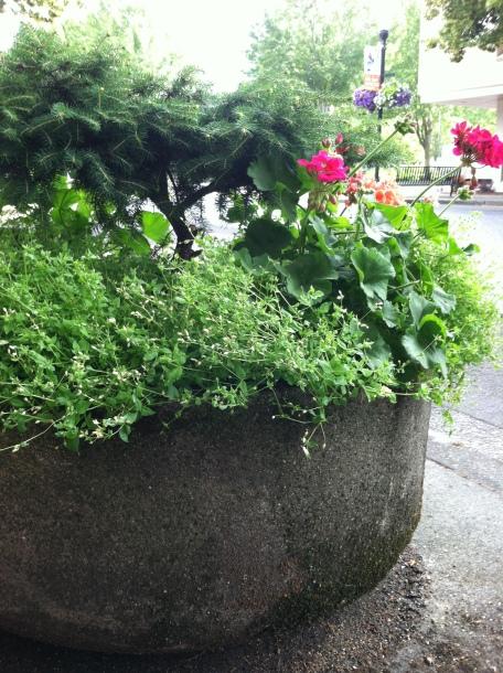 Cement pot of flowers